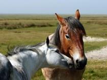 Der Pferdekuß