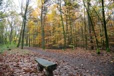 20171114-Vorster-Wald-18