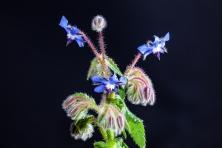 20170418-Pflanzen-46 (B,Radius8,Smoothing4)